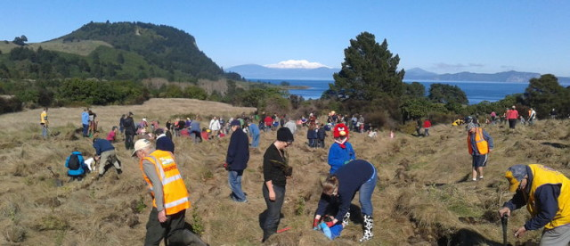 Whakaipo Bay Community Planting Day