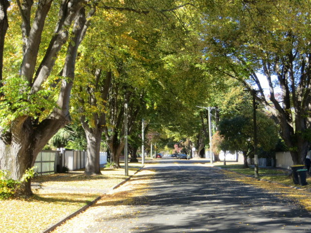 3.Tree-lined streets, some of more than 50,000 trees planted on Christchurch streets and parks