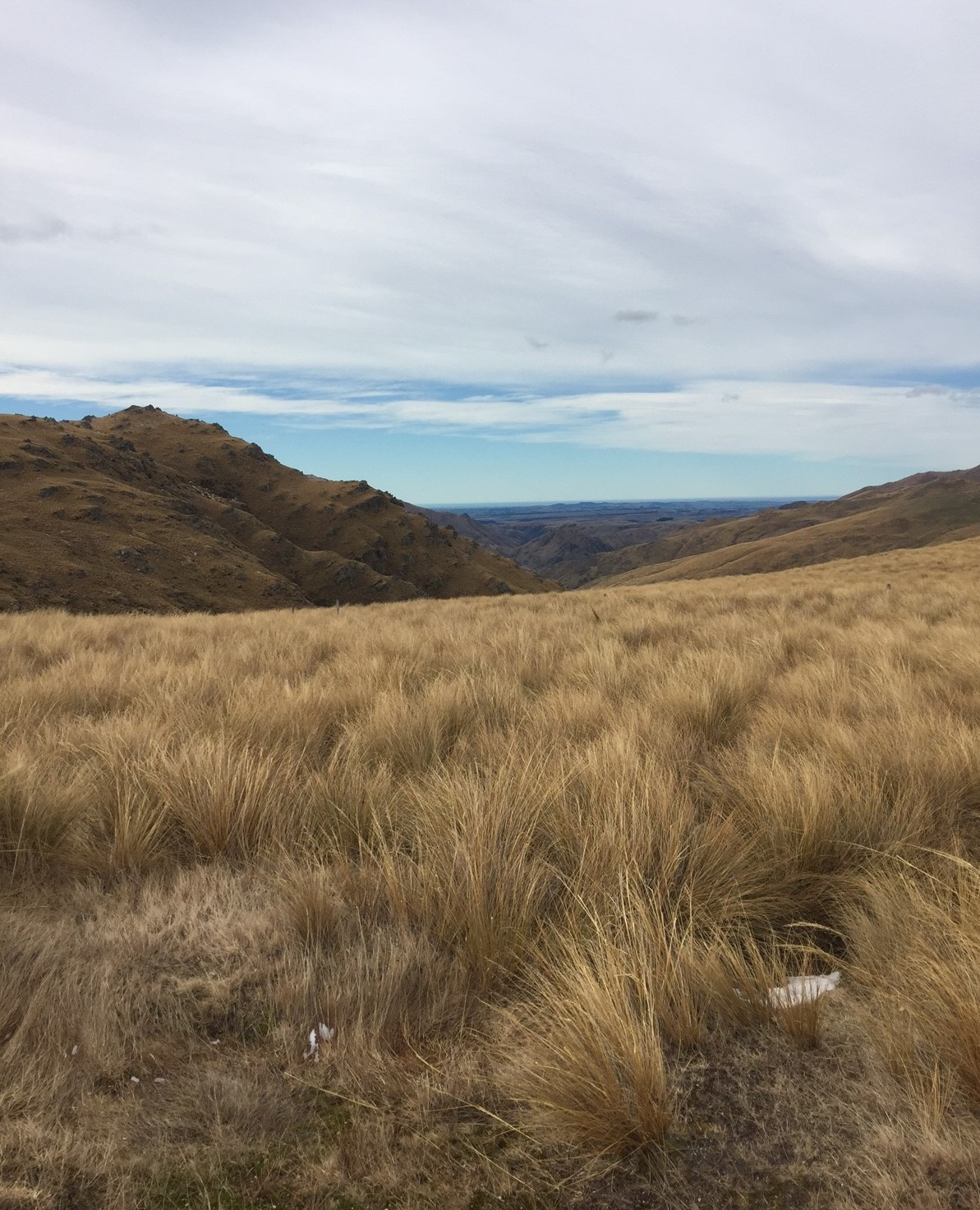 Danseys pass Tussock2